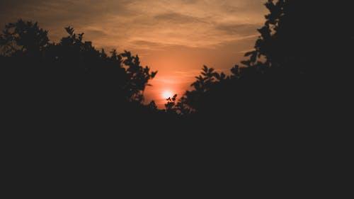 Free stock photo of afternoon, heaven, morning sun, orange