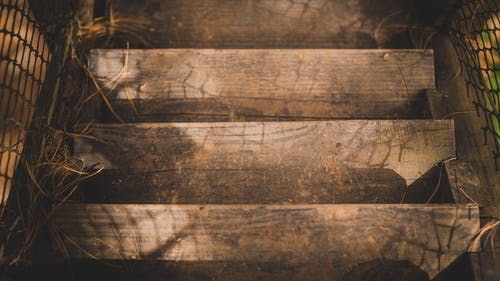 Free stock photo of brown, down, downstairs, nature