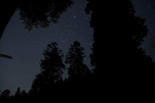 Free stock photo of all star, bare tree, night