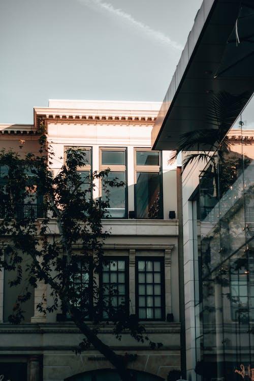 Foto d'estoc gratuïta de a l'aire lliure, arbre, arquitectura, articles de vidre