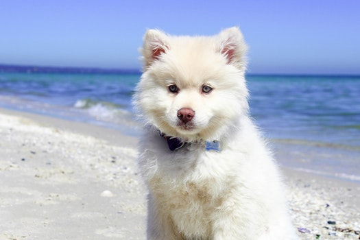 Portrait of Dog Standing on Beach
