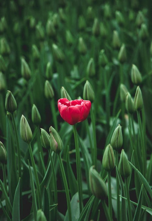 Selective Focus Photo of Red-petaled Flower