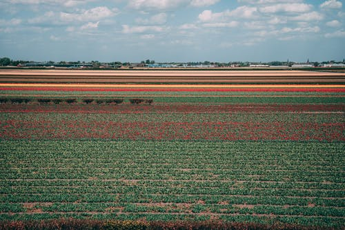 Photo of Red and Green Flowers Field