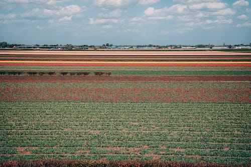 Photos gratuites de agriculture, automne, campagne, champ de fleurs