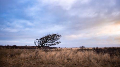 Foto stok gratis kayu, langit, pagi