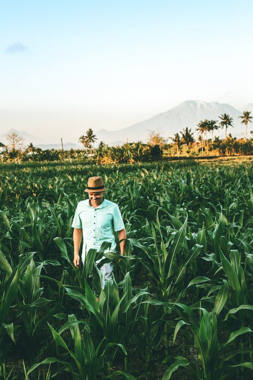 Photo of a Man Wearing Teal Short sleeved Shirt Standing on  Corn Field