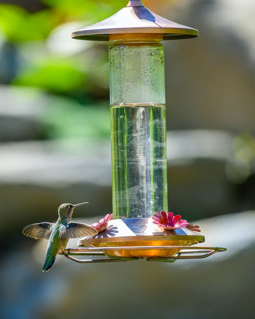 Hummingbird Perched on Bird Feeder