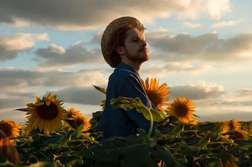 Бесплатное стоковое фото с апельсин, багровое небо, бразилия, закат