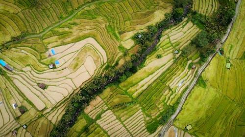 คลังภาพถ่ายฟรี ของ การเกษตร, จากข้างบน, ทุ่งข้าว, บาหลี