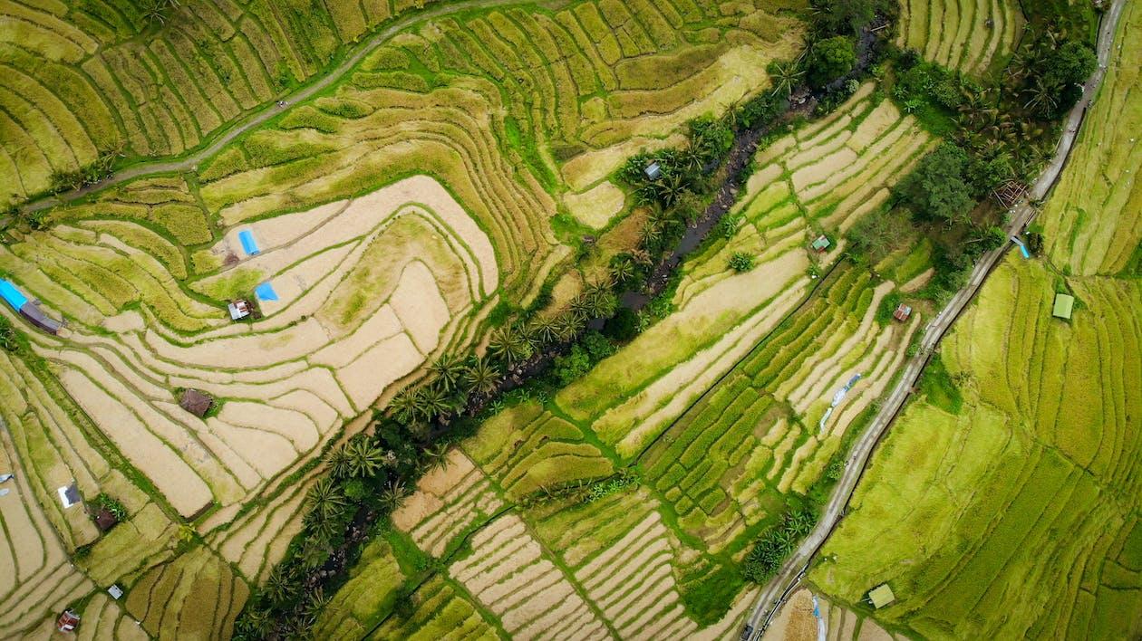 aerofotografia, agricultura, arrozal