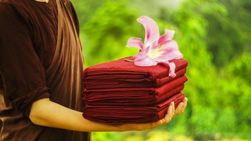 Fotos de stock gratuitas de bata kathina, efecto desenfocado, flor, floración