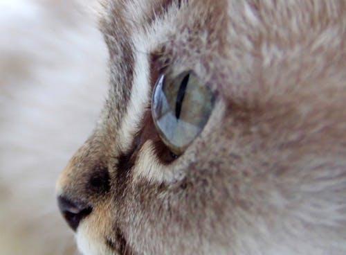 고양이, 새끼 고양이, 클로즈 업의 무료 스톡 사진