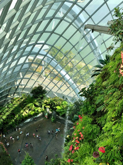 Free stock photo of botanical gardens, flowers, gardens by the bay, glass dome