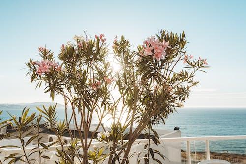 Photos gratuites de centrale, fleurs, mer, océan