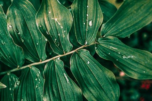 Δωρεάν στοκ φωτογραφιών με δροσοσταλίδες, νεκρή φύση, πράσινα φύλλα, πράσινος