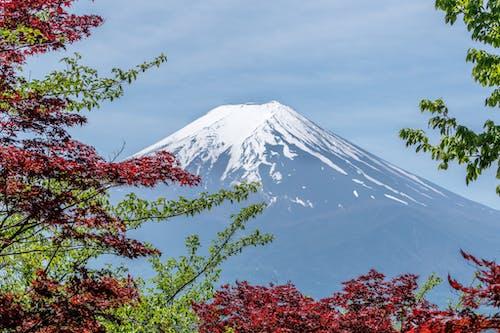 Photos gratuites de arbres, asie, attraction touristique, beau paysage