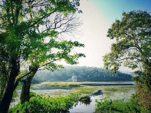 Gratis lagerfoto af dam, grønt træ, landskab, natur