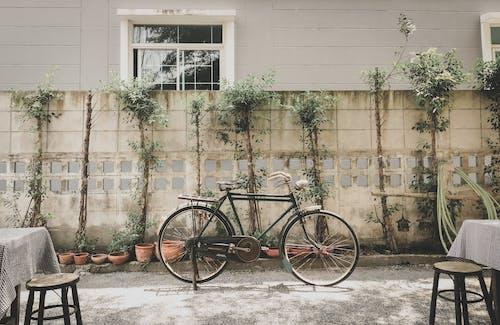 Ingyenes stockfotó bicikli témában