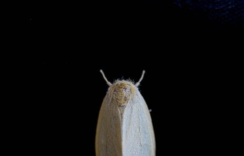 White and Yellow Moth