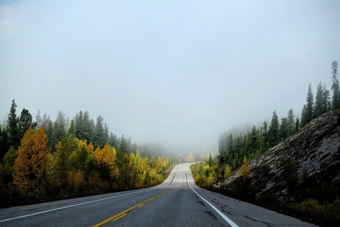 kopec, les, mlha