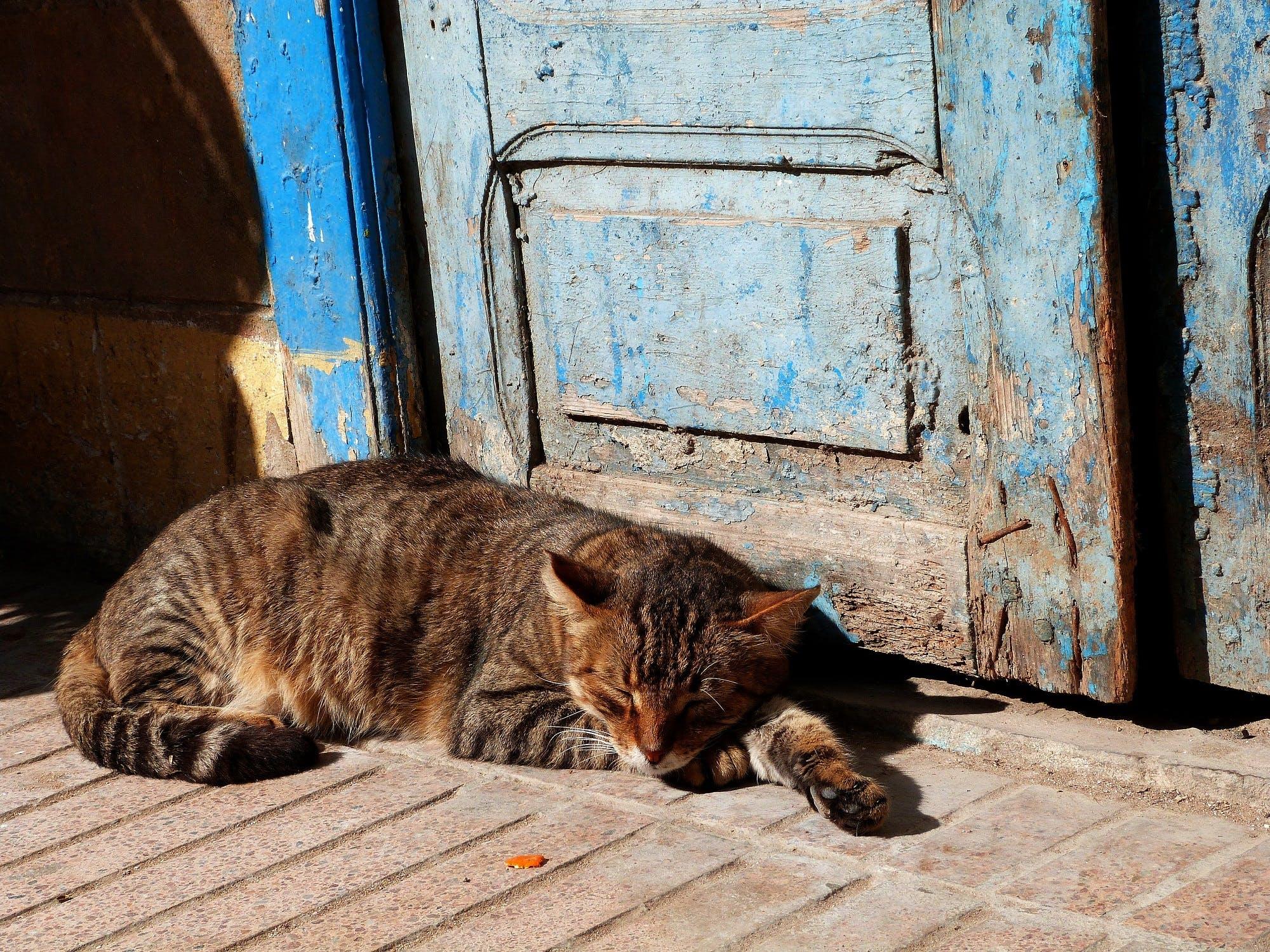 Cat Relaxing Outdoors