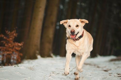冬季, 動物, 可愛, 可愛的 的 免費圖庫相片