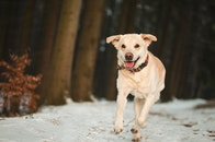 winter, animal, dog