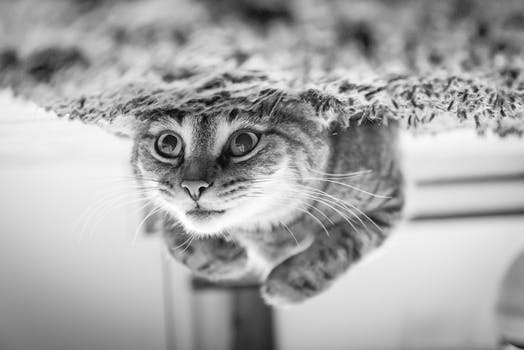 close up of cat - Black And White Wallpaper