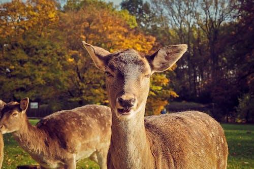 Gratis lagerfoto af afslapning, bane, close-up, dyr