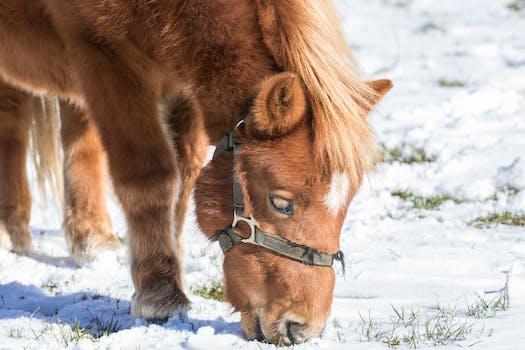 Free Stock Photo Of Animal Farm Foal