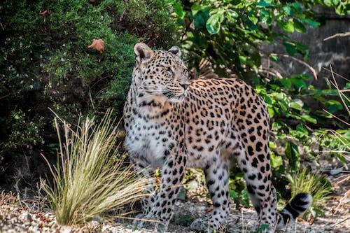 Foto d'estoc gratuïta de animal, animal salvatge, arbre, caçador