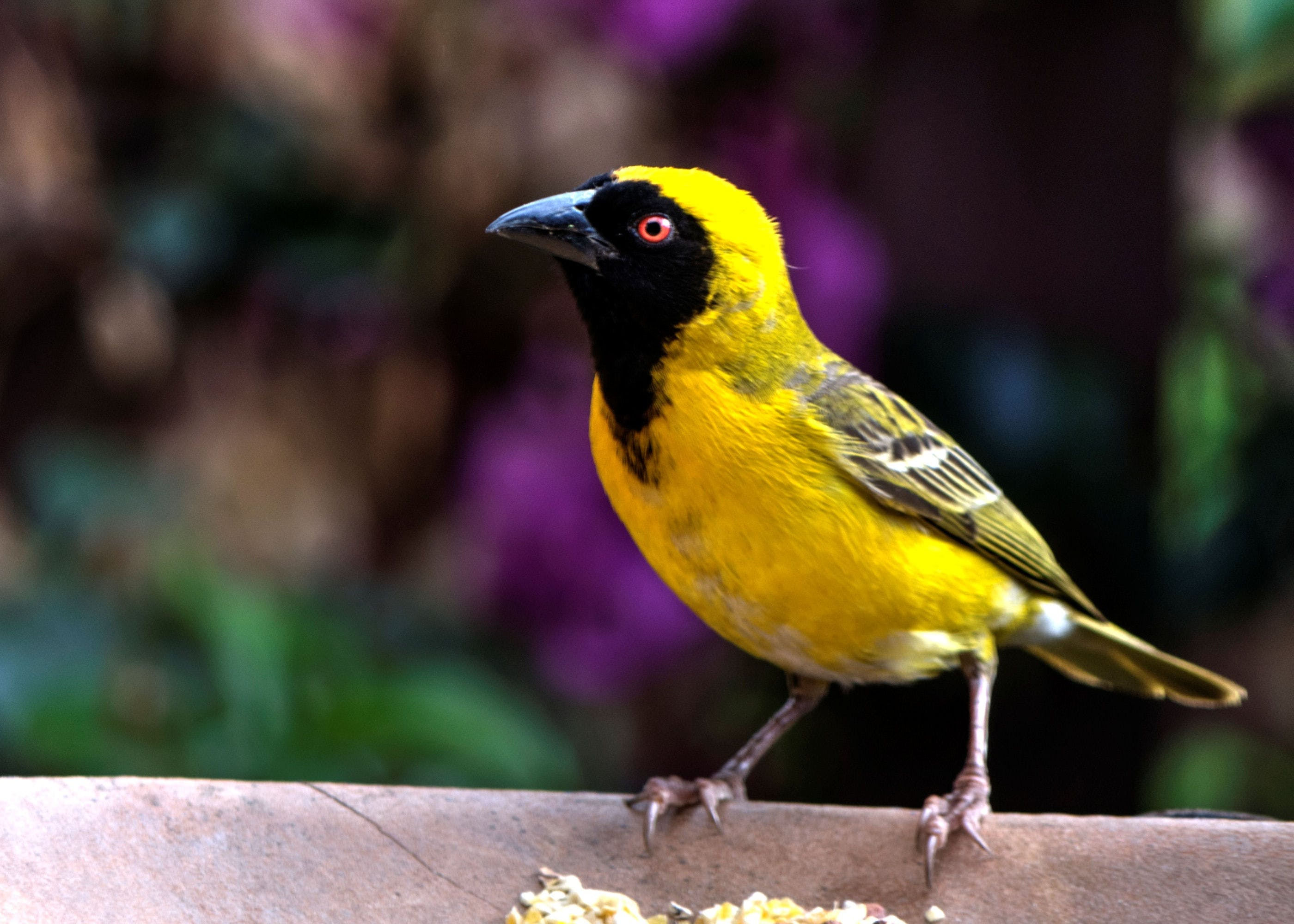 Bird Perching on Outdoors