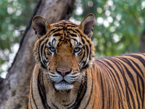 Foto stok gratis binatang, binatang buas, fotografi binatang, kehidupan liar