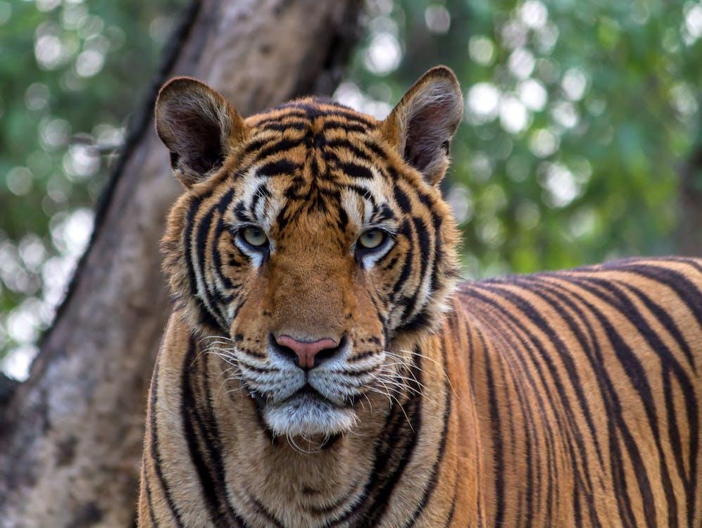 67+ Gambar Keren Binatang Buas HD Terbaru