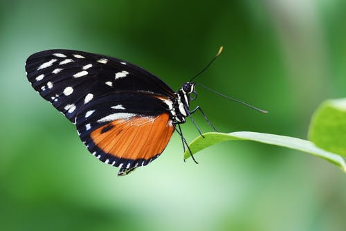 Gratis arkivbilde med insekt, liten, makro, nærbilde