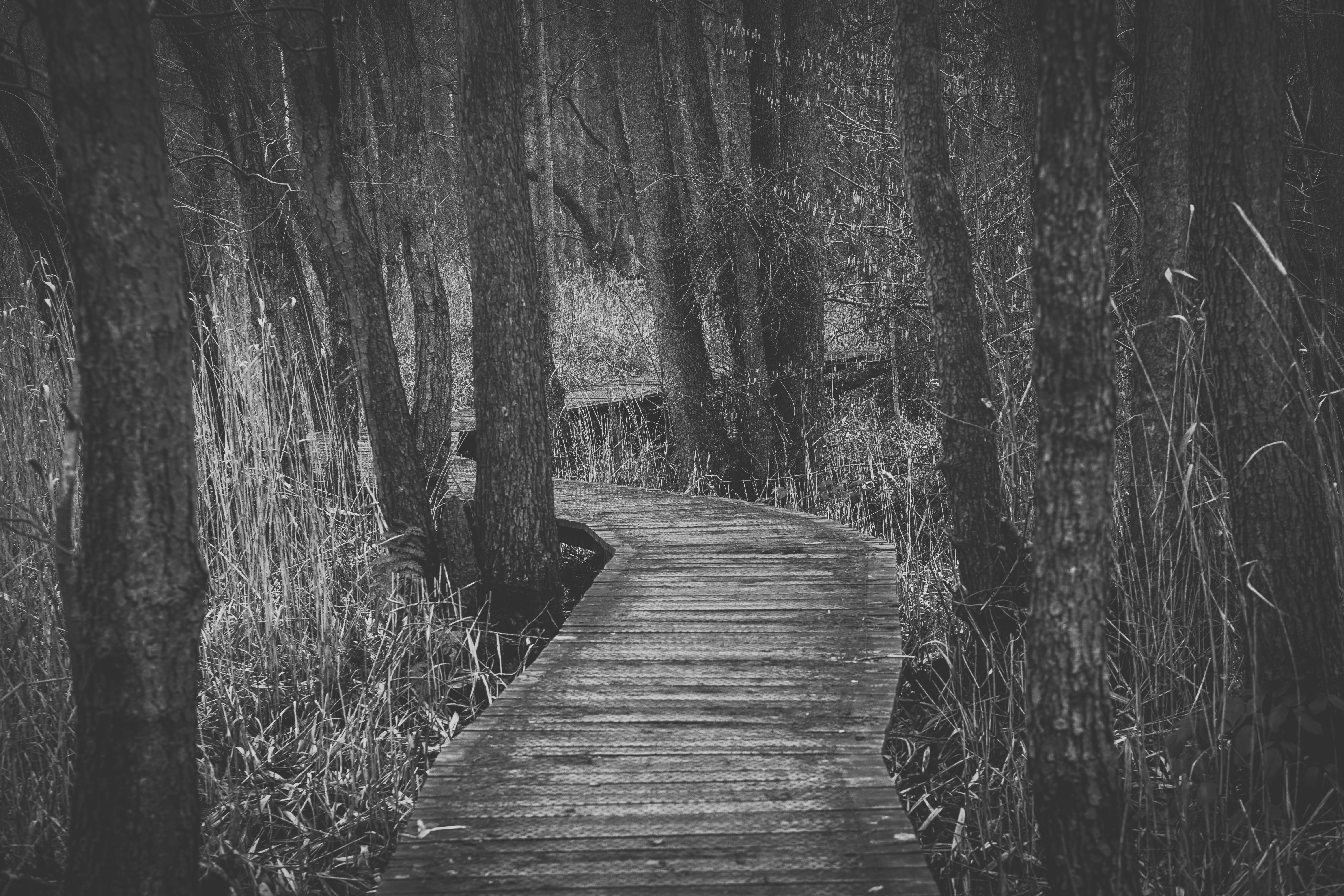 Boardwalk Amidst Trees in Forest