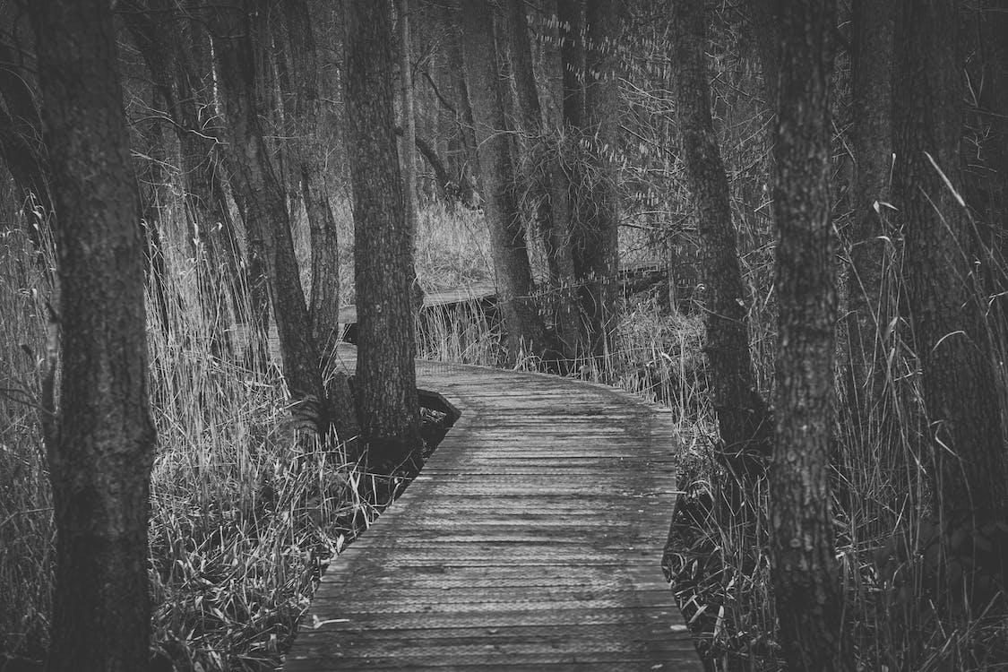 вода, деревья, дорожка