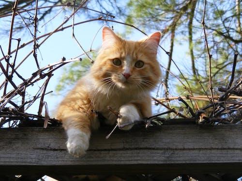 Безкоштовне стокове фото на тему «кішка, котячі, милий, тварина»