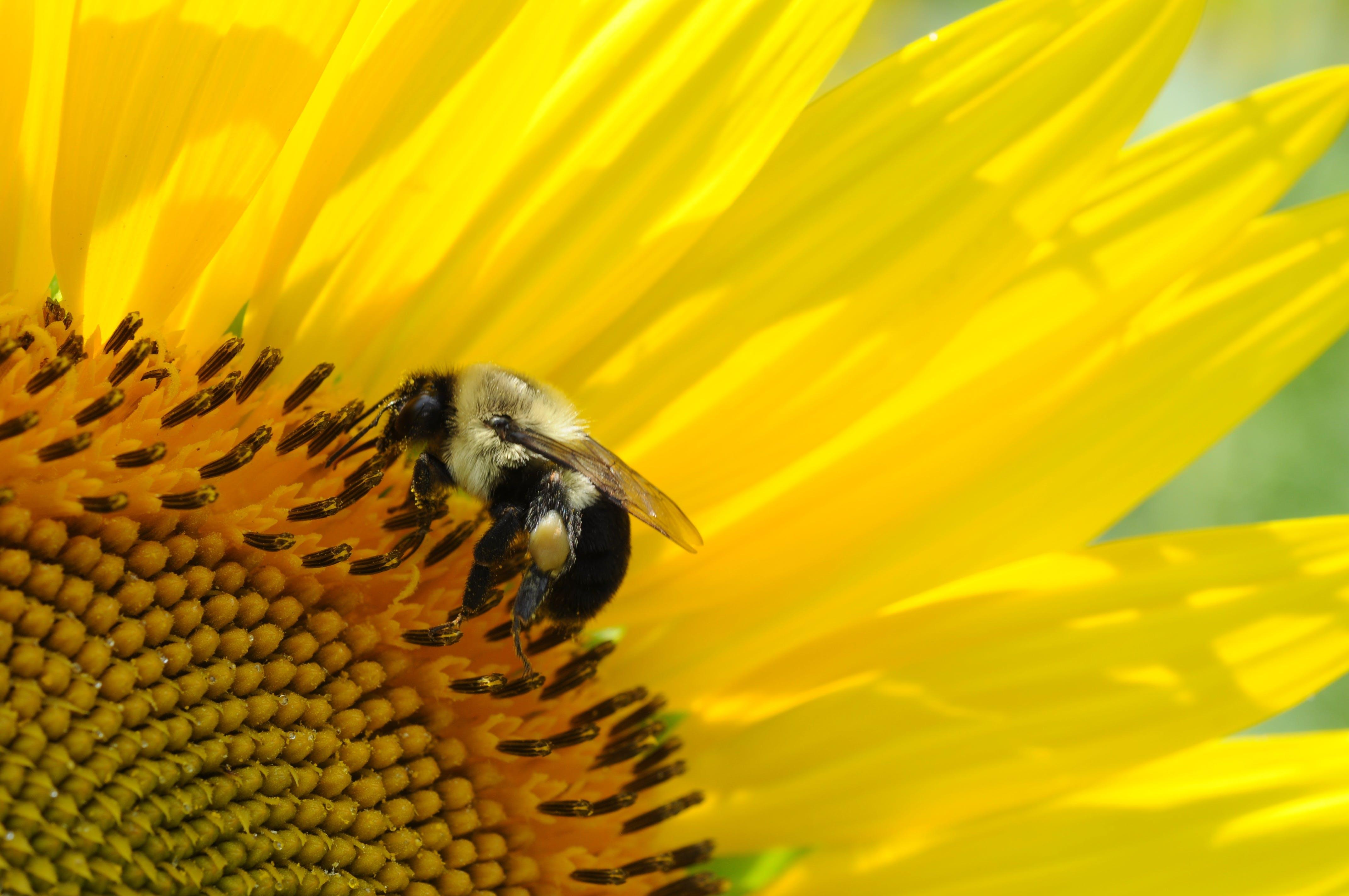 動物, 向日葵, 增長, 夏天 的 免費圖庫相片