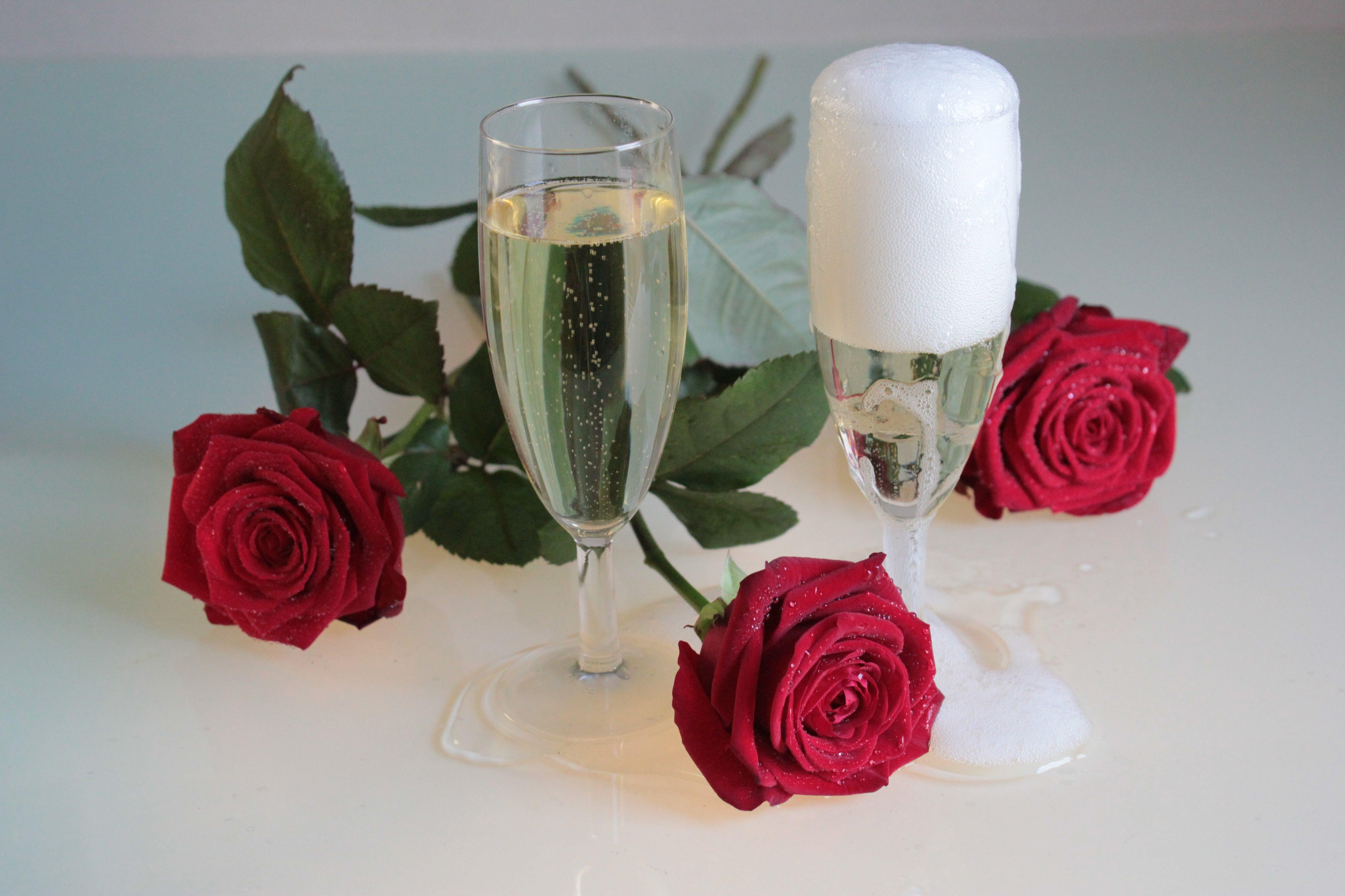 Základová fotografie zdarma na téma červené růže, flóra, krásné květiny, kvést
