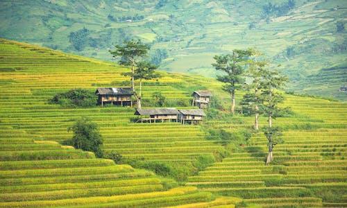 Gratis stockfoto met boerderij, gewas, landschap, mooi uitzicht