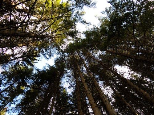 天性, 森林, 樹木, 樹林 的 免费素材照片