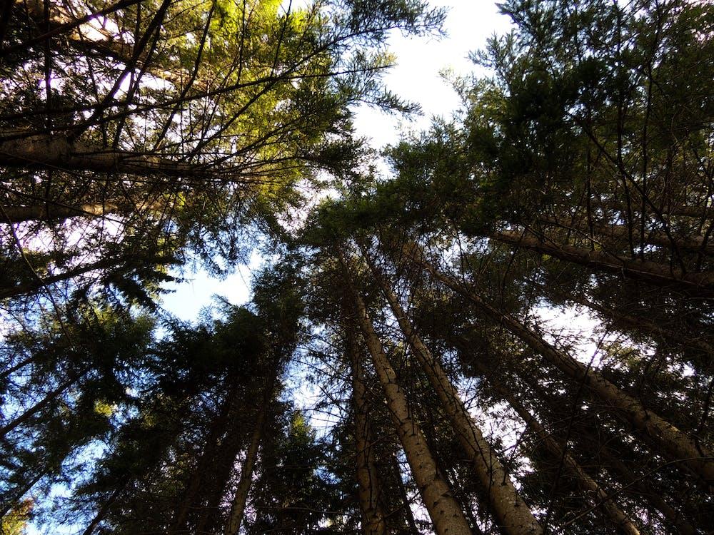ağaçlar, bakış açısı, çevre