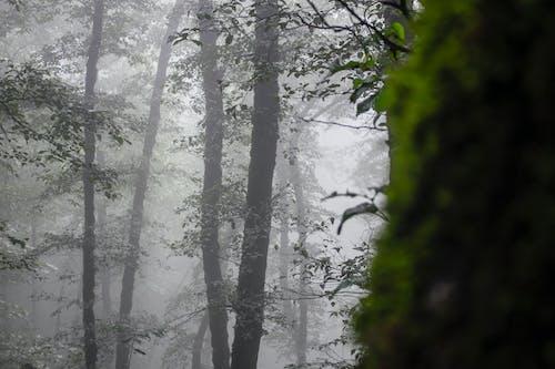 Darmowe zdjęcie z galerii z las, mglisty, straszny