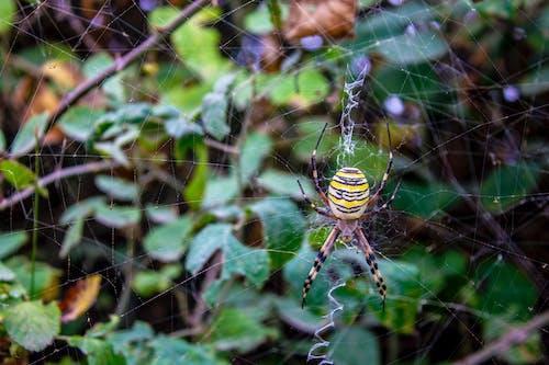Darmowe zdjęcie z galerii z pająk, siatka