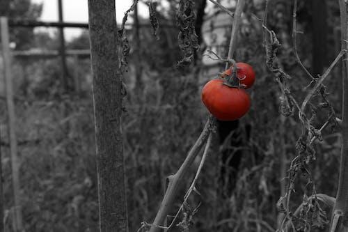 Foto profissional grátis de jardim, P&B, planta, plantar
