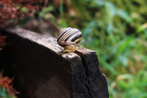 Shallow Focus Photography of Yellow and Black Snail