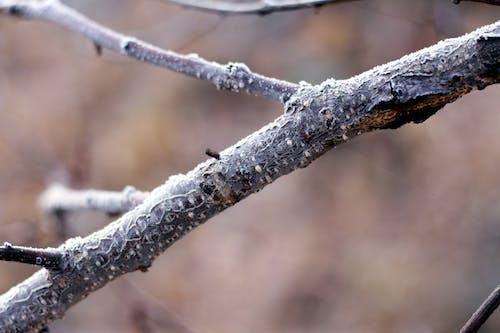 Foto profissional grátis de congelado, filial, galho, glaceado