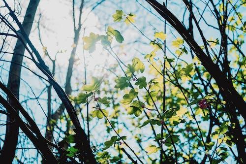 Gratis lagerfoto af bare træ, blade, close-up, dagslys