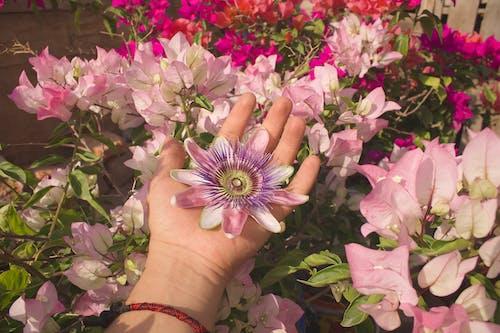 Δωρεάν στοκ φωτογραφιών με εργοστάσιο, ευτυχία, λουλούδια, φυτά